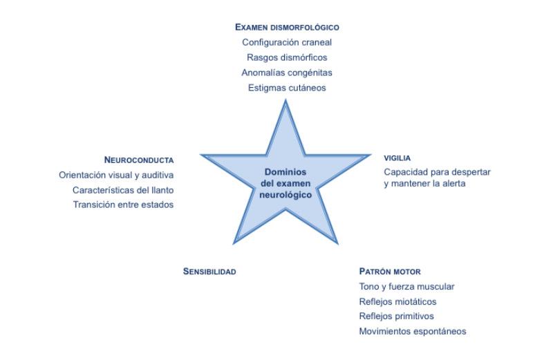 Figura 2. Dominios que se evaluan en el examen neurológico neonatal